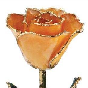 rose_page1_orange_full
